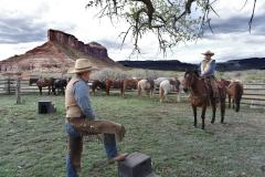 DSC_0896 - 2 - cow folk